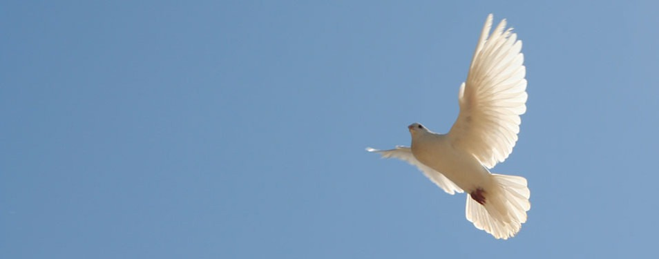 dove with blue sky