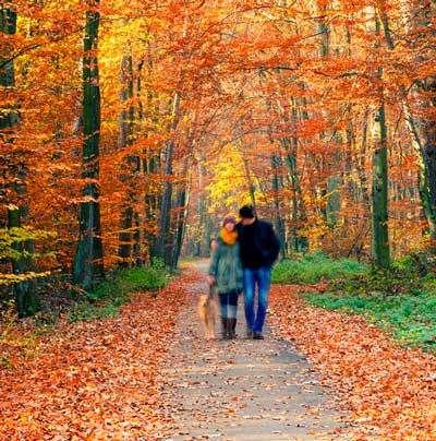 couple walking dog in autumn